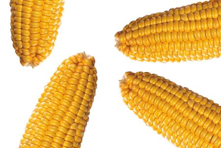 Bacground: corn on white bacground