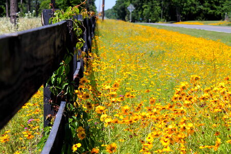 Wildflowers on the side of the road.