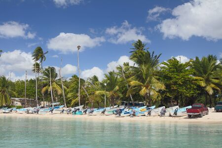 motor boats: Palm trees and motor boats on tropical beach. Bayahibe Dominican Republic