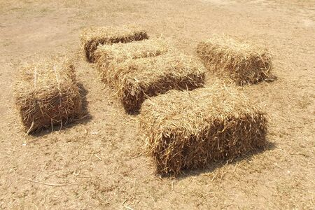haystack: Bale of hay isolated on a white background as an agriculture farm and farming symbol of harvest time with dried grass straw as a bundled tied haystack.