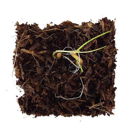 sapling vegetation plants Stock Photo
