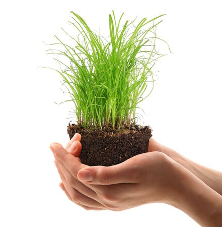 green grass and earth in the hands Stock Photo