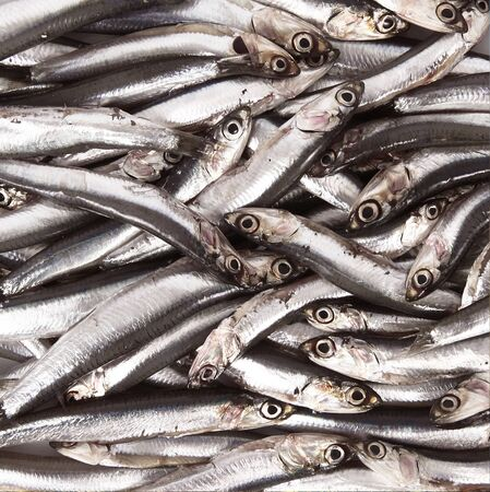 view of anchovies background