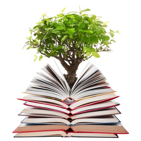 Stack of open books with tree on white background Stock Photo