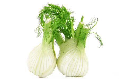 fresh isolated fennels on white background