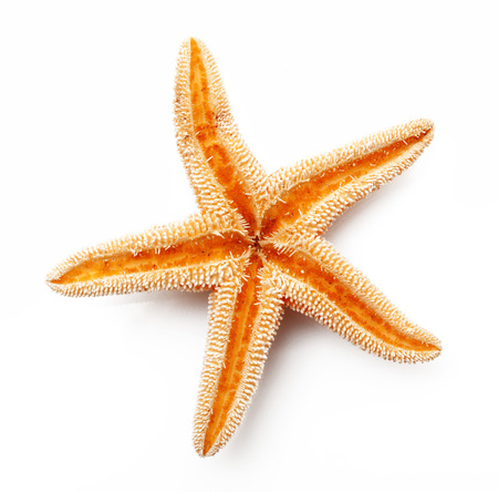 isolated starfish on white background