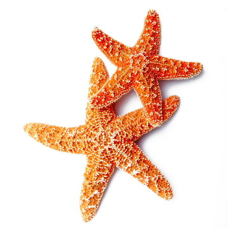 two starfish on white background Stockfoto