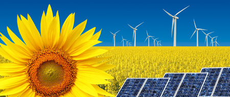 Sunflower with windmills, concept of alternative sustainable energy