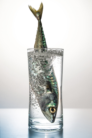 a fish inside a glass with mineral water