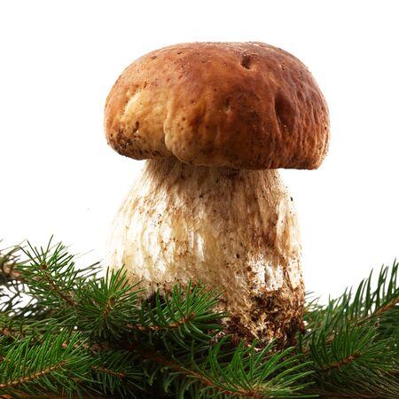 porcini mushrooms on white background