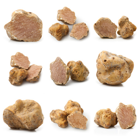 original italian white truffles collage on white background