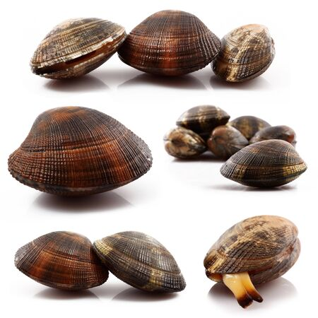 isolated fresh clams collage on white background Stock Photo