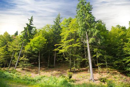 a quiet alpine forest landscape Stock Photo