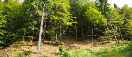 a quiet alpine forest landscape Foto de archivo