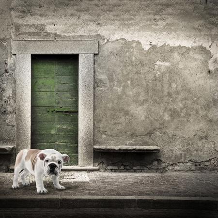 Watchdog in front of the house door