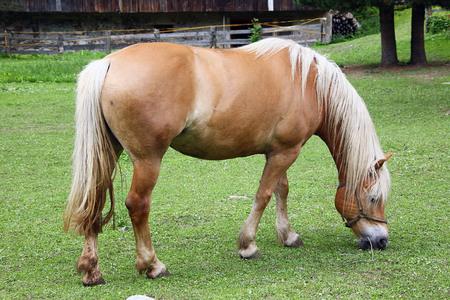 a little horse on his farm