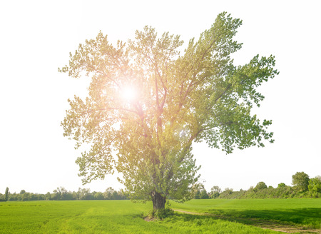 a Huge green isolated tree with reflected light