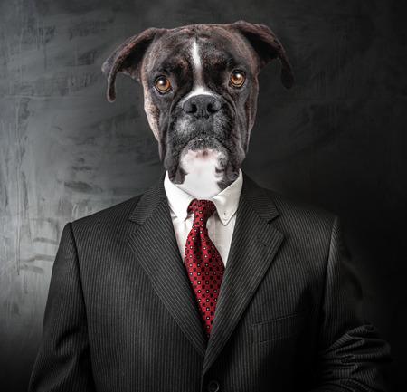 an Original Elegant Business Dog