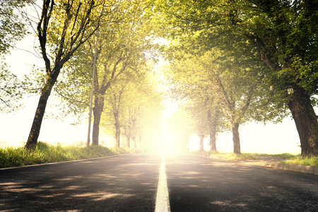 a dazzling light on a tree-lined road