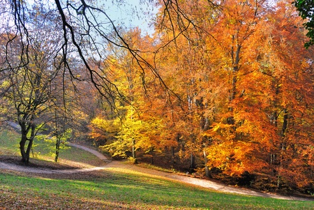 Forest in autumn Stock Photo - 9463522