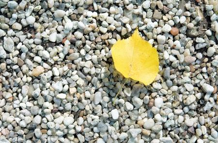 Foliage - Gravel