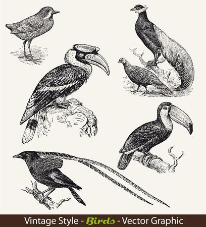 silueta aves: Las aves Vector conjunto, plantilla, de fondo