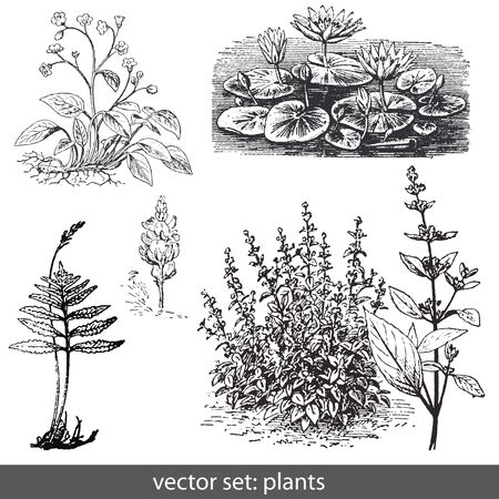 vector set plants and flower