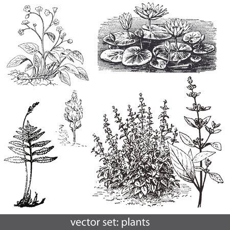 Vektor-Set Pflanzen und Blumen Illustration