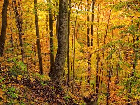 Herbstwald Lizenzfreie Bilder