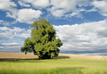 Tree in the landscape