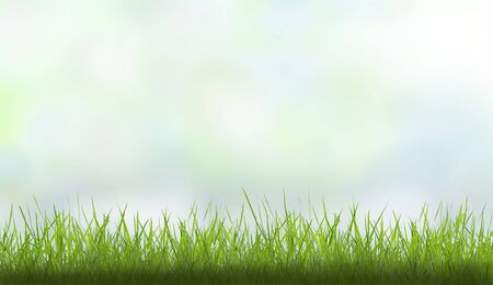 spring background with grass and colorful sky photo