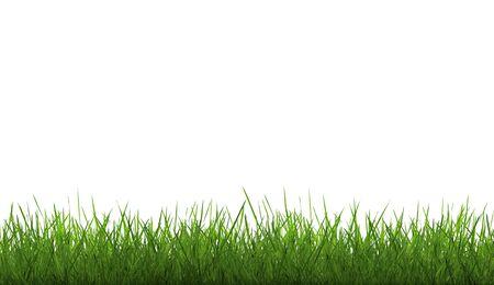 Gras und Himmel withe
