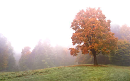 Autumn forest in the mist Stock Photo