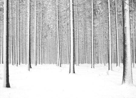 Wald im kalten Winter und Schnee