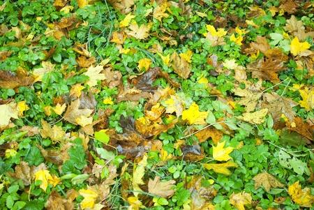 Leafs im Herbst Farbe Lizenzfreie Bilder