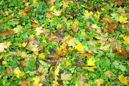 Leafs in autumn color