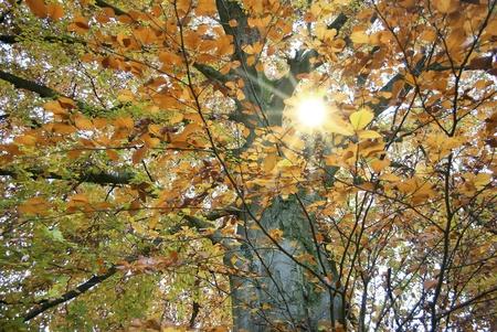 Forrest im Herbst und Sonnenlicht Lizenzfreie Bilder