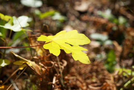 leaf in forest at autumn