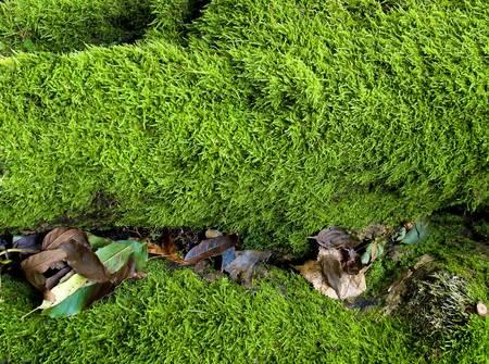 Moss und Bl�tter im Herbst