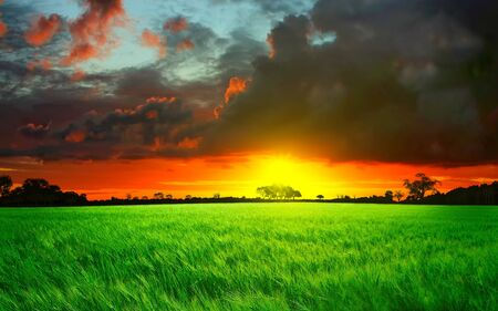 Beautiful sunset with wheat field photo