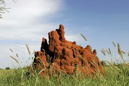 A termite mound in Tarangire Park in Tanzania Africa