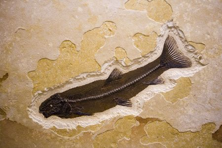 Fossil found in Utah