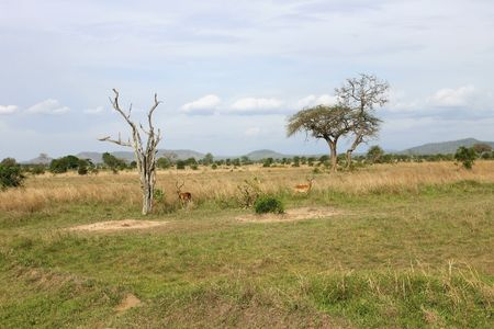 Mikumi National Park in Tanzania Africa Stock Photo