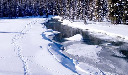 Animal tracks in the snow along a frozen creek Stock Photo