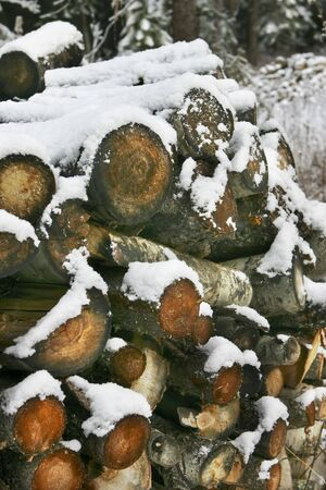 Winter supplies of firewood Stock fotó