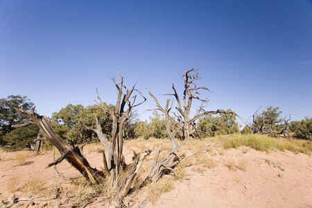 Dead tree in the desert in Uath Stock Photo