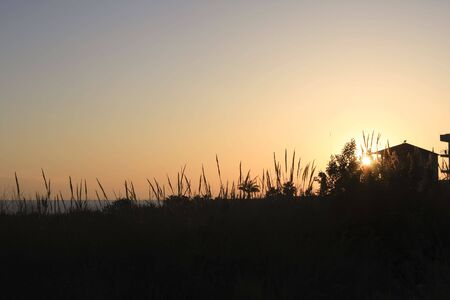 Tall grasses on the beach are silhouette as the sunsets