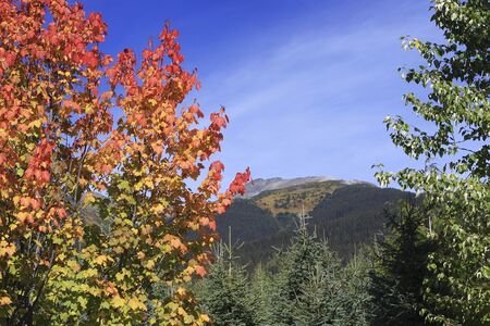 Colourful maple bush with mountain landscape in background Stock Photo