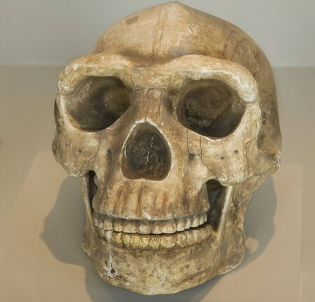 A Skull from indigenous native in Peru, South America Stock Photo
