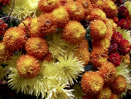 Yellow orange and red Chrysanthemum bouquet found in Peru Stock Photo